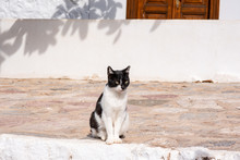 A Beautiful Wild, Stray Cat Sits On A Stone Street On A Sunny, Autumn Day, On The Enchanting Greek Island Of Hydra.