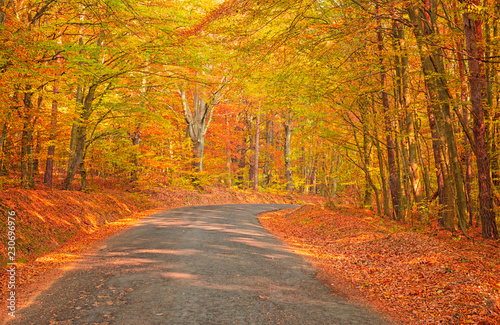 Colorful autumnal scene in the forest