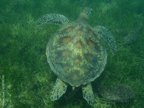 Foto op Aluminium Schildpad Diving next to the sea turtle in Australia