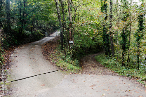 Fotografija  which patch? The forked road with fallen leaves in the forest