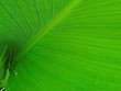 close up of green leaf nature for background