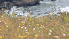 Cliff With Wild Flowers With Blurred Ocean On Background
