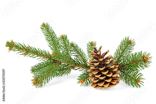 Fotografía  Fir tree branches and pine cone on white background