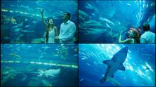 Guy And Girl Walk On An Underwater Aquarium.