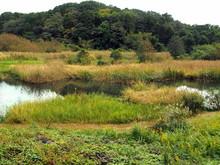 秋の公園の朝の湿地風...