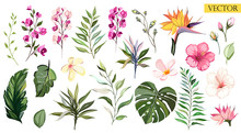 Tropical Vector Flowers. Set  Floral Illustration. Exotic Leaf Isolated On White Background. Fcollection With Flowers For Invitation To Party Or Holiday