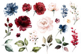 Fototapeta Kwiaty - Set watercolor elements of roses collection garden red, burgundy flowers, leaves, branches, Botanic  illustration isolated on white background.  bud of flowers
