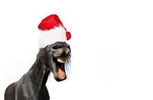 Funny Portrait Of Horse Wearin...