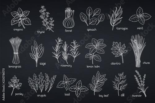 Photo  Popular culinary herbs