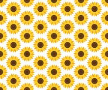 Vector Seamless Sunflower Pattern. Floral Pattern.