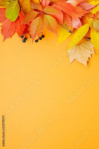 Fototapeta Bright Autumn leaves on orange background. Flat lay, top view, copy space obraz