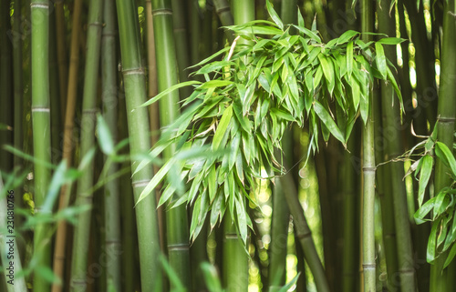In de dag Bamboo Bamboo leaves lit by the sun on the background of a bamboo grove