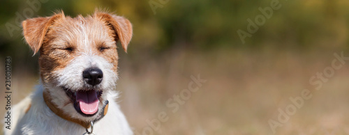 Web banner of a happy smiling jack russell pet dog puppy with blank, copy space - 230810783