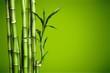 Leinwanddruck Bild - Many bamboo stalks on blurred background