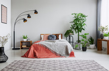 Urban Jungle In Bedroom With D...