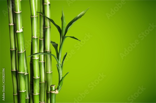 Foto op Canvas Bamboo Many bamboo stalks on blurred background