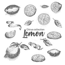 Black And White Set Of Hand Drawn Tropical Citrus Fruit. Lemon. Ink Sketch Style. Good Idea For Templates Menu, Recipes, Greeting Cards.