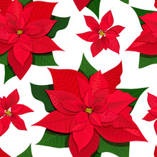Poinsettia Flowers. Colored Vector Illustration Seamless Pattern. Isolated On White