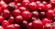Red Cranberry Berries As A Bac...