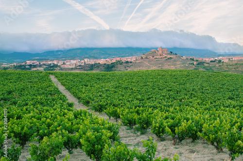 Vineyards. Rioja, Spain. San Vicente de la Sonsierra. Sonsierra.