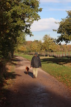 Lady Strolling Along In The Park With Her Dog