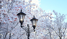 Winter Landscape With Lanterns.  Winter Lantern And Snow Covered  Rowan In Park. Beautiful Nature Winter Background