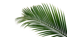 Green Leaves Of Nipa Palm Or M...