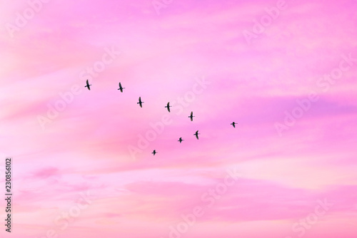 Recess Fitting Bird Migratory birds flying in the shape of v on the cloudy sunset sky. Sky and clouds with effect of pastel colored