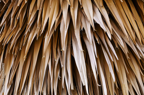 Fotografie, Obraz  Close up dried brown leaves tree. Abstract nature background.