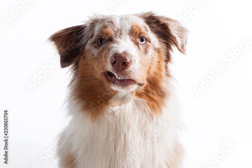 Photo Zähne fletschender Hund