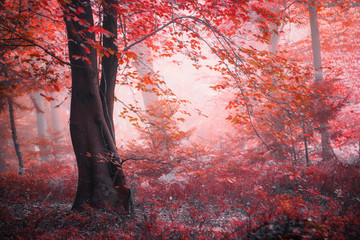 Obraz na Szkle Vintage Fantasy fairytale autumn season foggy red colored forest.