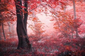 FototapetaFantasy fairytale autumn season foggy red colored forest.
