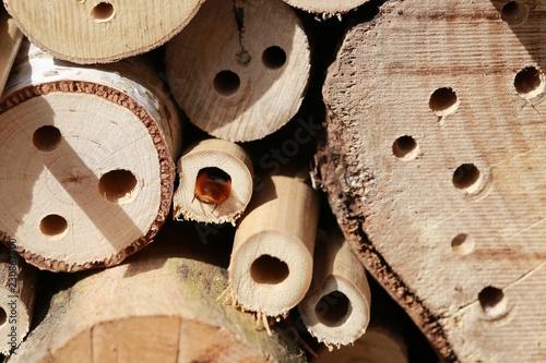 Fotografía  Wildbienen am Nest