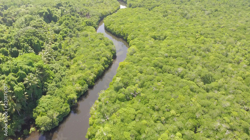Foto op Canvas Pistache Aerial view of river running through Mangrove forest
