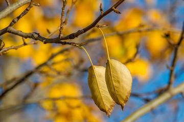 Jesienne liście na tle niebieskiego nieba