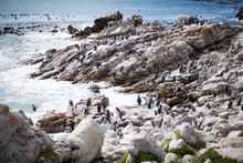 View To Betty's Bay Near Hermanus, Huge Picturesque Rocks And Cliffs Are Inhabited With Bank Cormorant (Phalacrocorax Neglectus) And African Penguins South Africa.