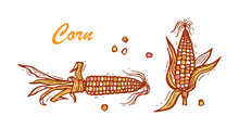 Flint Corn (Indian Corn Or Cal...