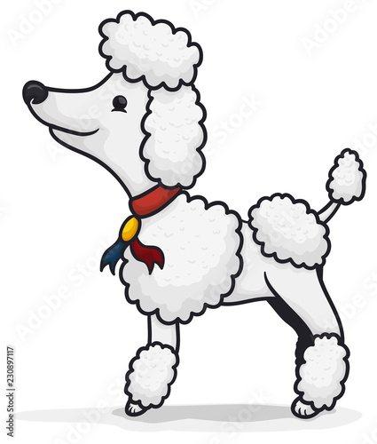 Photographie Elegant Poodle Posing for a Photoshoot Session, Vector Illustration