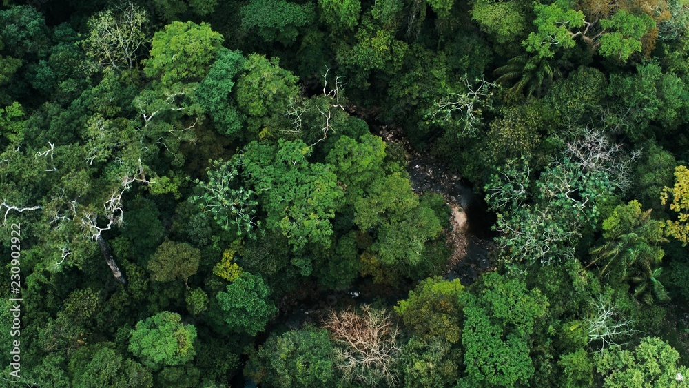 Fototapeta Aerial drone image of the rainforest and a small river at Amboro National Park, Bolivia