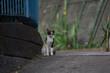 街猫 野良猫