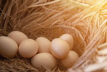Close Up Of Many Eggs In The Nest. Chicken Eggs On Rice Straw In Farms In The Countryside In Thailand.