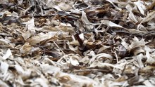 Close Up Of Dried Eel-grass Wa...