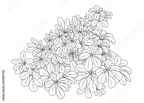 Free Rain Forest Trees Coloring Page, Download Free Clip Art, Free ... | 357x500