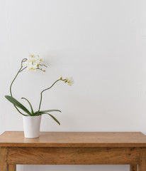 White phalaenopsis orchid in pot on wooden oak side table against white wall with copy space