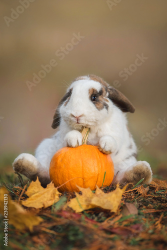 Funny little rabbit sitting with a pumpkin