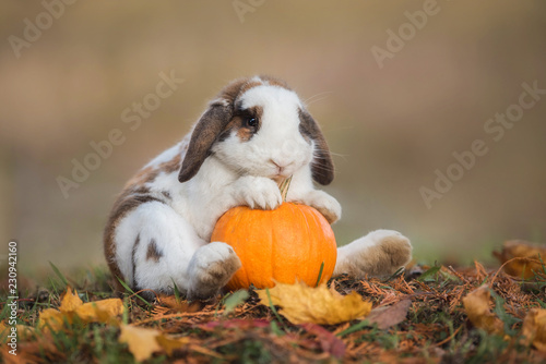 Leinwand Poster Funny little rabbit with a pumpkin