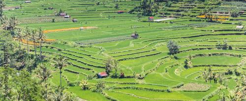 Fotobehang Rijstvelden Panorama of a terraced rice field on Bali, Indonesia