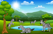 The Zebras Are Enjoying Nature...