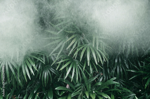 Vertical garden with tropical green leaf with fog and rain, Dark tone Canvas Print
