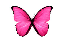 Beautiful Pink Butterfly Isola...